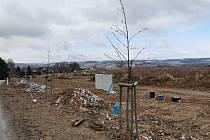 Stromky, které museli pracovníci Technických služeb města Pelhřimova přesadit kvůli stavbě parcel, teď rostou po levé straně silnice vedoucí z Pelhřimova do Řemenova.