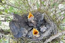 Snímky z přírody