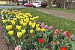Pelhřimov zdobí tisíce květin.