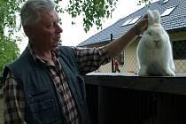 """""""Chovatelství přináší radosti i starosti,"""" říká zkušený posuzovatel králíků Josef Kratochvíl."""