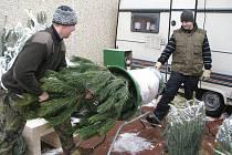 Vůně jehličí včera zaplnila prostor před pelhřimovským Kauflandem. Stánek si tam rozbalili prodejci vánočních stromků. Symboly Vánoc tam budou nabízet až do Štědrého dne