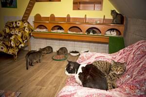 Kočičí útulek ve Skrýšově u Polné