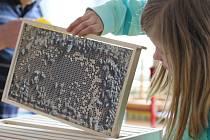 V Senožatech se v sobotu 6. května  uskutečnilo oblastní kolo soutěže Zlatá včela.