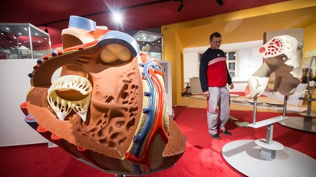 Muzeum Dr. Aleše Hrdličky v Humpolci. Ilustrační foto