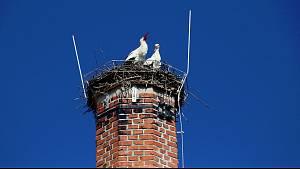 Čápi na komíně v Kamenici nad Lipou už jsou kompletní.