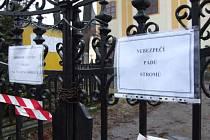 POČÁTKY. Statný listnáč spadl na náhrobky na hřbitově v Počátkách