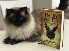 Zatím poslední příběh z potterovské série navazuje po devatenácti letech. Jeho hlavním hrdinou je syn Harryho Pottera.