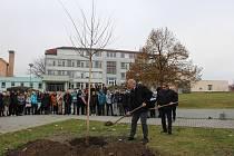 Před Základní školou v Kamenici nad Lipou teď roste nový strom.