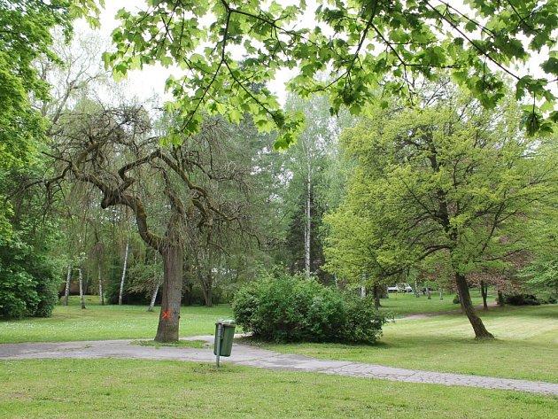 Nemocné a poškozené stromy v Městských sadech nahradí nové, které budou vysázeny v následujících měsících.