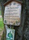 """Pozoruhodná lípa """"Barborka"""" se nachází poblíž pramene Hejlovského potoka."""