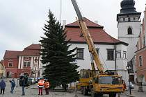 Loni Masarykovo náměstí v Pelhřimově ozdobil smrk z Družstevní ulice.