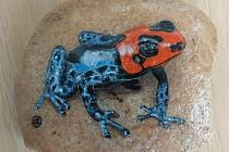 Kamínek šípové žabky od Jany likča