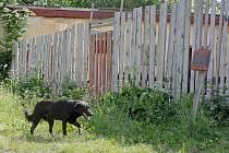 Problémový pes v Počátkách, kde se také otázkou regulace pohybu psů zabývali.