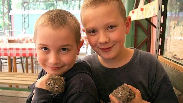 Pobyt na letním táboře v Počátkách si ve společnosti zvířátek užívají všechny děti.