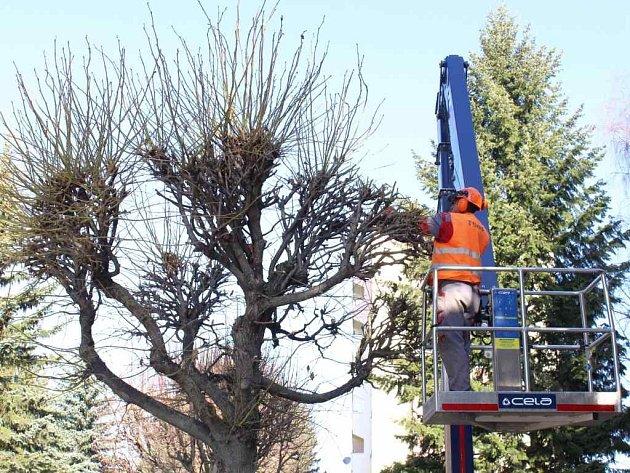 V Pelhřimově pokračuje pravidelná revitalizace zeleně.