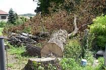 Mohutná lípa v jedné z jiřických zahrad to má spočítané. Na inspektorech životního prostředí nyní spočívá úkol zjistit, zda majitel pozemku porazil strom bez povolení oprávněně.