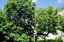Prastarý symbol Kamenice nad Lipou reprezentuje Vysočinu v celostátní anketě.
