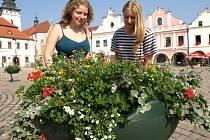 Pelhřimovské Masarykovo náměstí pro letošní turistickou sezonu zkrášlily nové květináče. Záměr se líbí nejenom turistům, ale i obyvatelům města.