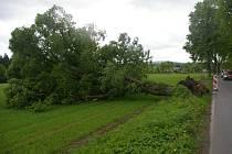 Vyvrácený strom v aleji podél silnice z Pelhřimova do Putimova.