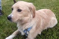 Lola čeká na nového majitele v útulku.
