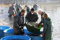 Rybáři lovili v sobotu 7. listopadu rybník v Radětíně.