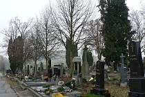 Na hřbitově v Pelhřimově je zhruba 52 vzrostlých stromů. Mimo to se tam nachází túje, jalovce, smrky či   kaštany. Nejvíce emocí však stále budí lípy.