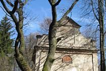 Starý dub u kaple svaté Anny