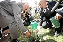 Odpoledne se prezident vydal přímo do Kališť. Zde  zasadil růži nové odrůdy  Gustav Mahler.