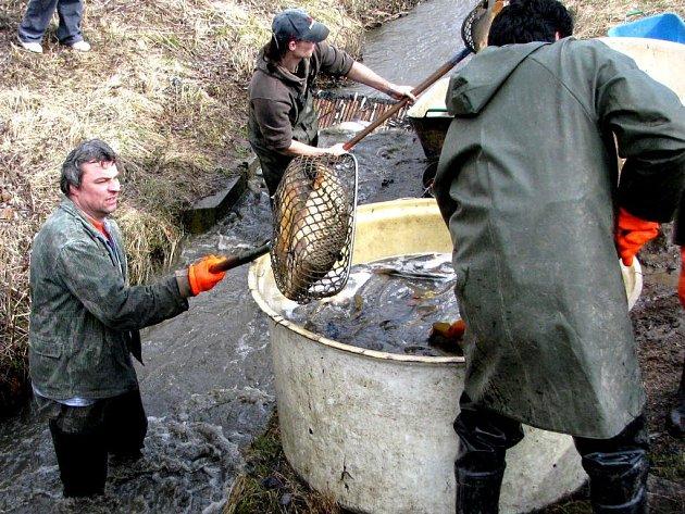 První letošní výlov rybníku na pelhřimovsku. Dolní Medenice u Pelhřimova