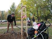 Před dvěma roky byli tatínkové, maminky i kočárky s dětmi k vidění při sázení na pelhřimovském sídlišti.
