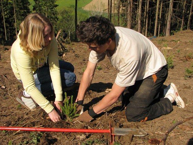 Košetičtí školáci v rámci Dne Země vysadili kousek za vesnicí 600 stromků.