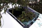 V pelhřimovské nemocnici zasahovali hasiči u pádu stromu na zaparkovaný osobní automobil.