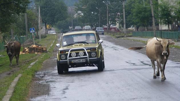 Typický obrázek podhorské vesnice v Zakarpatí: auta se o silnici běžně dělí s dobytkem.