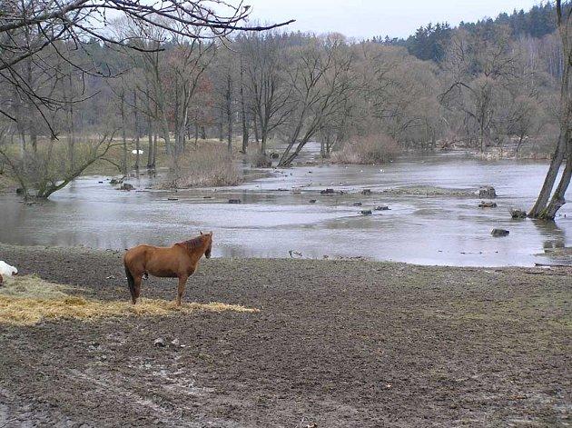 Dramaticky vyhlížející rozvodněné řeky na Pelhřimovsku se dávají navzdory deštivému počasí na ústup.