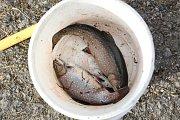 Chytání ryb na dírkách v Humpolci.