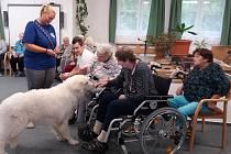 Michaela Chábová poskytuje terapii se psy.