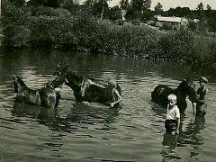 Plavení koní na dolním vřesnickém rybníku.
