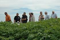 Účastníci semináře si na závěr prošli políčka s nejnovějšími odrůdami brambor s velmi aktraktivními názvy.