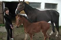 Koně byli a jsou nedílnou součástí rodinné farmy. Otec paní Mošnové Zdeněk Koten byl zakladatelem jezdeckého sportu na Humpolecku.
