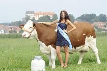 Tato fotografie byla pořízena na letišti v Kámeně nedlouho předtím, než se Hanka stala kraví Miss. Spolu s ní na snímcích pózuje Miss Agro 2012 Lenka Stančeková. Lenka měla z Hanky nejprve trochu respekt, ale během fotografování se spolu skamarádily.