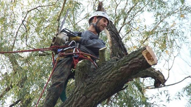 Zdeněk Tesař raději leze na vysoké stromy než po horách. V Cerekvi odlehčil od uschlých větví starým vrbám.