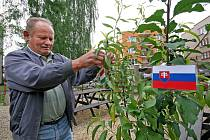 Středoevropský vícedruhový strom od 22. května roste i v Pelhřimově