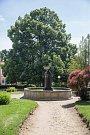 Lípa svobody na kamenickém náměstí postoupila mezi dvanáctku finalistek letošní celostátní ankety Strom roku.