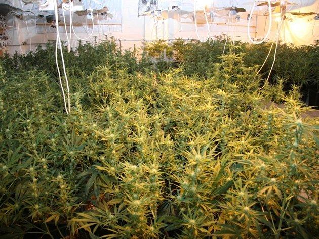 Pelhřimovští kriminalisté na místě bývalé jednopatrové výrobní haly, která se nachází na okraji Černovic, zajistili bezmála 1400 rostlin v různých stádiích růstu.