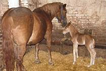 Takto vypadali kletečenský Blesk junior a jeho třiadvacetiletá matka Šárka sedm hodin po porodu.