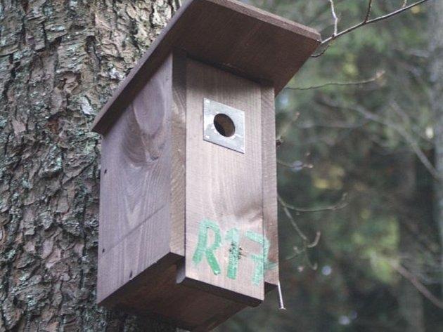 Nejběžnějšími budkami pro ptáky jsou takzvané sýkorníky.