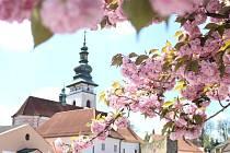 Pěkné slunečné počasí svědčí jak lidem z pelhřimovského okresu, tak i například rostlinám, květinám či stromům.
