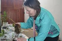 První burzu rostlinných přebytků v humpolecké knihovně si nenechala ujít ani zahrádkářka Hana Balounová (na snímku). Akci doplnila výstava knih se zahrádkářskou tematikou. Odpoledne nejen o bylinkách pohovořil František Hodač.