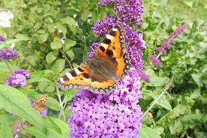 Letní krajina a krása motýlů