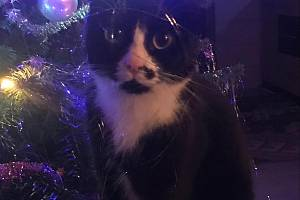 Kočka Jany Hotové.